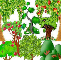 Загадка про лес