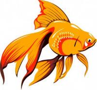 Загадка про рыбку