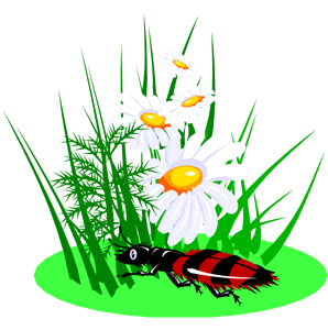 Ромашка и жук